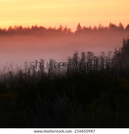 Silhouettes of grass in fog - stock photo