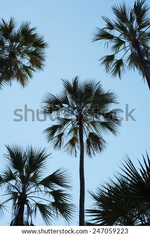 Silhouettes of palm trees against a clear blue sky. - stock photo