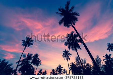 Silhouettes of palm trees against the twilight sky. - stock photo