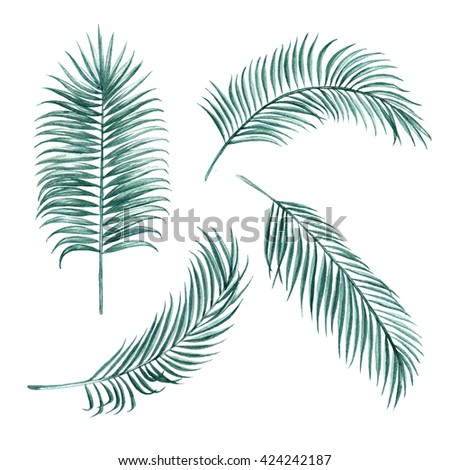 Silk palm green leaves tropical exotic watercolor  botany spring summer Hawaii beach , design object print textile backdrop,wallpaper isolated on white background - stock photo