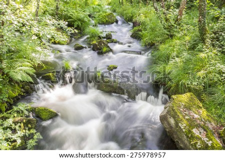 Silky water flowing in a river in the middle of a wild forest, Lugo, Spain - stock photo