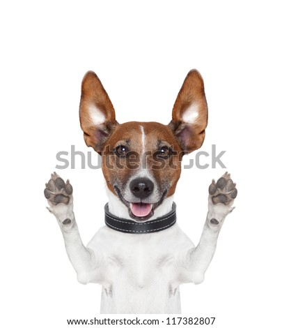 silly crazy dog with paws up - stock photo