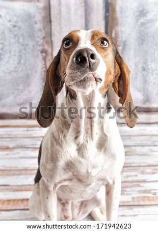 Silly dog - stock photo