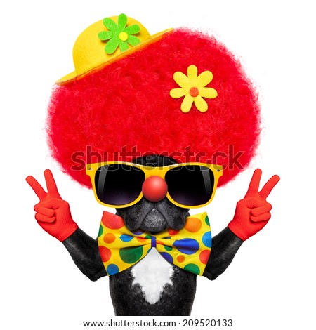 silly dog wearing clown costume with peace or victory fingers - stock photo