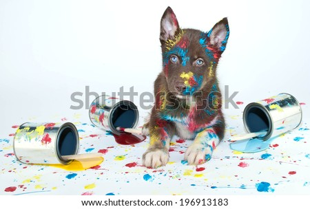 Silly Husky puppy that looks like he got into a bunch of paint cans and made himself a mess. - stock photo