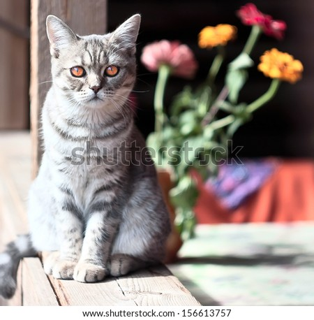 silver cat with a flowers on the bacground - stock photo