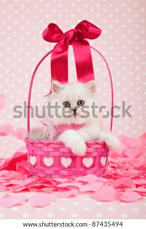 Silver Chinchilla kitten inside Valentine pink basket with flower petals - stock photo