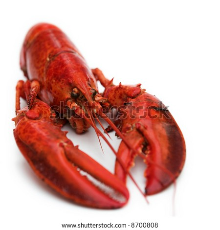 Simple composition of a lobster on white - shallow dof - stock photo