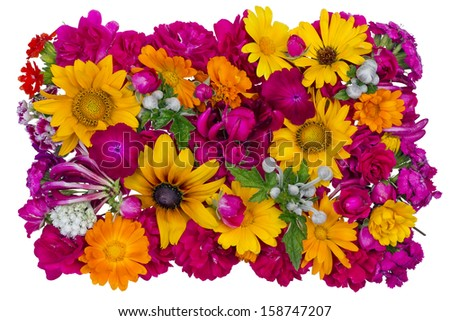 Simple floral banner  imagination from bright summers flowers and plants isolated - stock photo