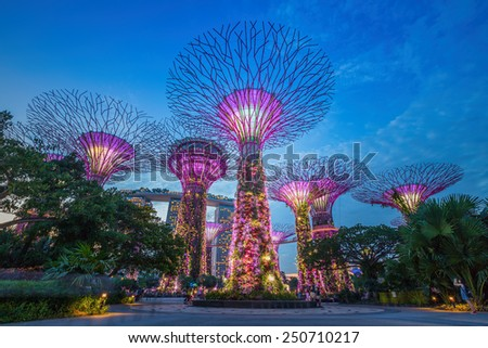 SINGAPORE-AUG 31,2014: Night view of The Supertree Grove at Gardens by the Bay in Singapore. Spanning 101 hectares, and five-minute walk from Bayfront MRT Station. - stock photo