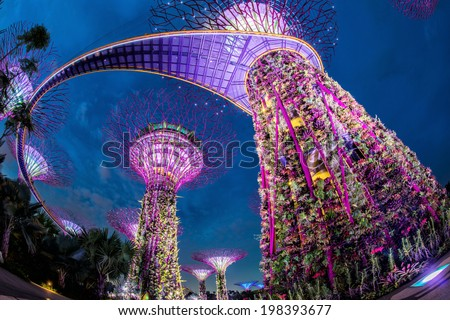 SINGAPORE - May 10: Night view of Supertree Grove at Gardens by the Bay on May 10, 2014 in Singapore. Spanning 101 hectares of reclaimed land in central Singapore, adjacent to the Marina Reservoir. - stock photo