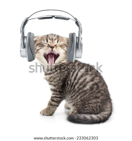Singing cat or kitten in headphones listening to music isolated - stock photo
