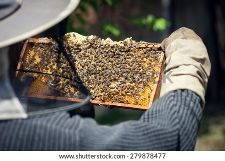 Single beekeeper holding honeycomb full of bees and honey - stock photo