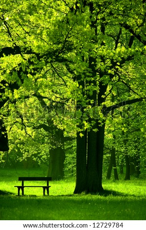 Single bench in park, under beautiful tree, spring - stock photo