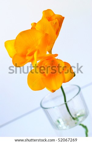 single branch of yellow freesia in a glass of water - stock photo