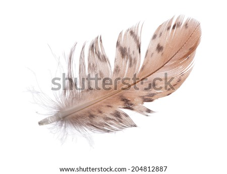 single brown feather isolated on white background - stock photo