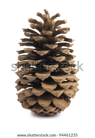 Single brown pine cone isolated on white background - stock photo