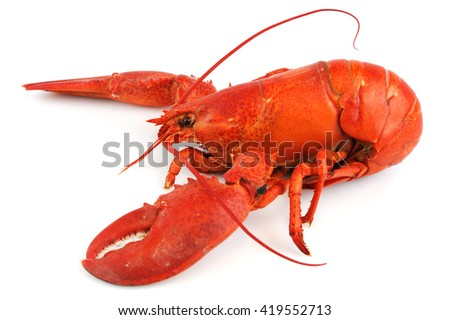 single cooked red lobster isolated on white background - stock photo