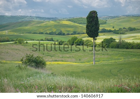 Single cypress tree in a wide open Tuscan landscape under a cloudy sky in spring - stock photo