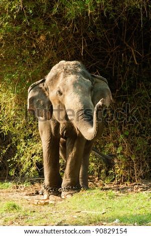 Single elephant - stock photo