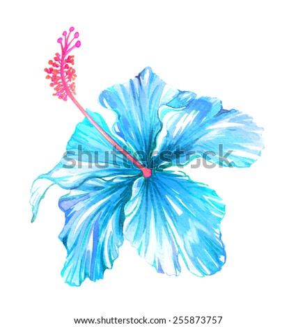 single exotic blue hibiscus flower. very detailed watercolor artistic drawing. isolated on white. - stock photo