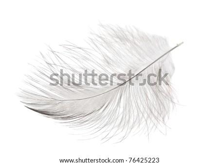 single fluffy light feather isolated on white background - stock photo
