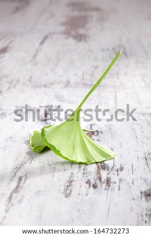 Single ginkgo leaf isolated on white wooden background. Natural healing, alternative medicine, country style. - stock photo