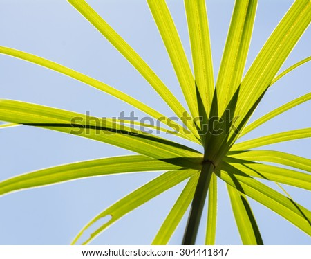 single green palm leaf - stock photo