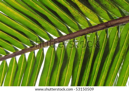Single green palm tree leaf - stock photo