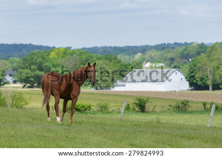 Single horse in pasture with barn in the background. - stock photo