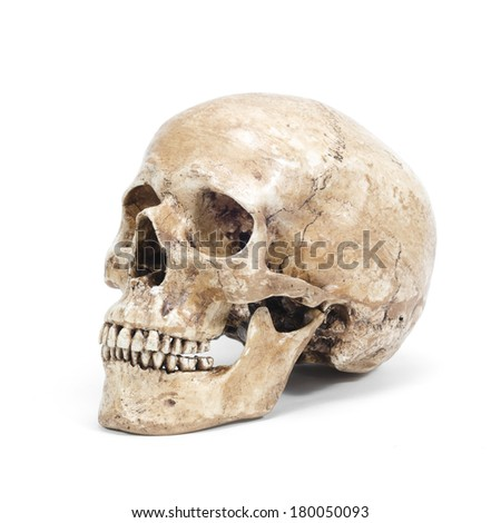 single human skull isolated on white background - stock photo