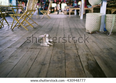 Single isolated cat lying down on the rustic brown wood planks floor. - stock photo