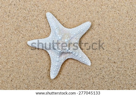 Single large white starfish on a smooth sandy beach - stock photo