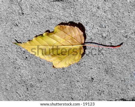 Single leaf on cement. - stock photo