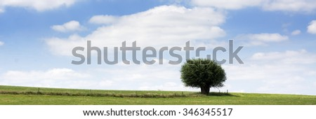 Single lonely tree in grassy panorama  landscape with blue sky and white clouds - stock photo