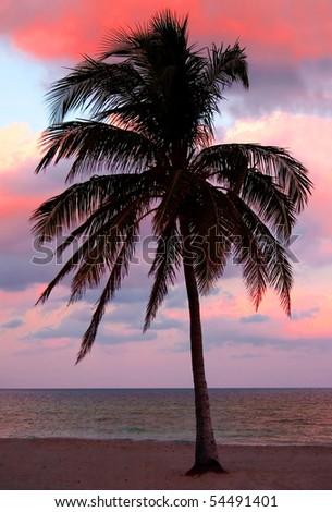 Single Palm - stock photo