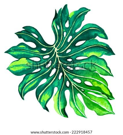 single palm leaf, monstera. - stock photo