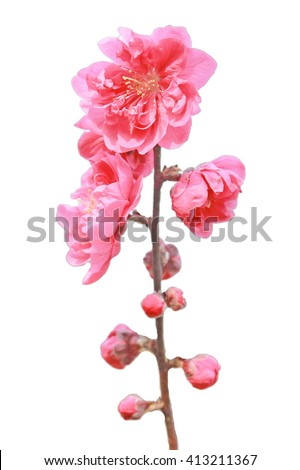 Single peach flower .Shallow DOF with wide aperture - stock photo