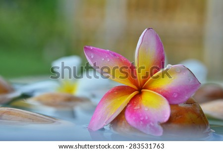 Single Plumeria Flower on Stones at Edge of Pool in Tranquil Spa Setting - stock photo