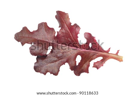 Single red gourmet lettuce leaf isolated on a white background - stock photo