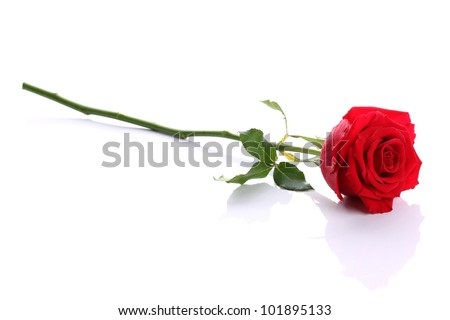 Single red rose flower on white background - stock photo