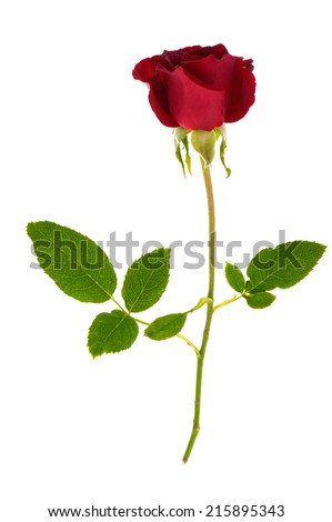 Single red rose flower with stem and leaves isolated on white background - stock photo