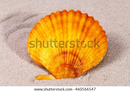 Single sea shell of mollusk on the sand, close up . - stock photo