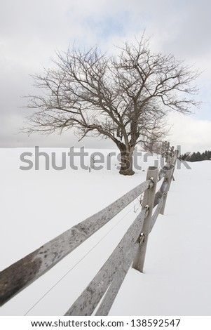 Single tree and a split fence in a field of snow, Stowe, Vermont, USA - stock photo