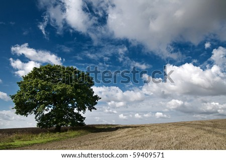 Single tree in a field in Hundon, Suffolk England with beautiful blue sky and white fluffy clouds - stock photo