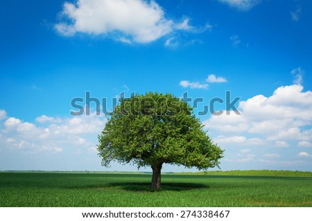 Single tree in a green field with blue sky and white clouds - stock photo