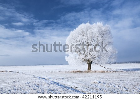 Single tree in frost and landscape in snow against blue sky. Winter scene. - stock photo