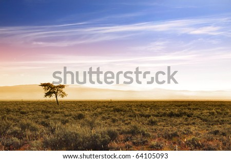 Single tree in Prairies in Wyoming with sun rise - stock photo