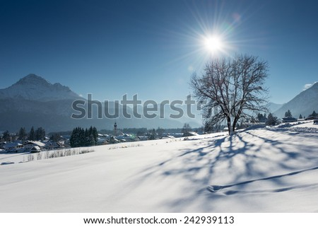 single tree in snow landscape with long shadow in alps - stock photo