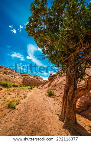 Single Tree in the Canyon Coyote Gulch Utah Landscape Vertical - stock photo